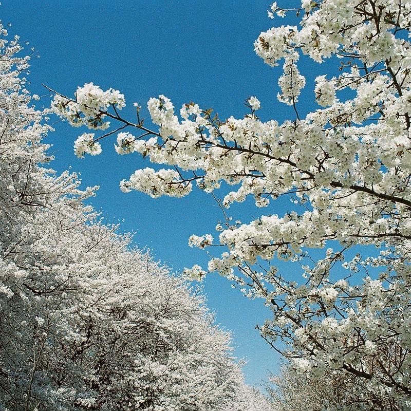 爽やかに春