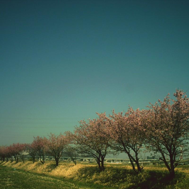 平成最後のCT民の桜祭り2019
