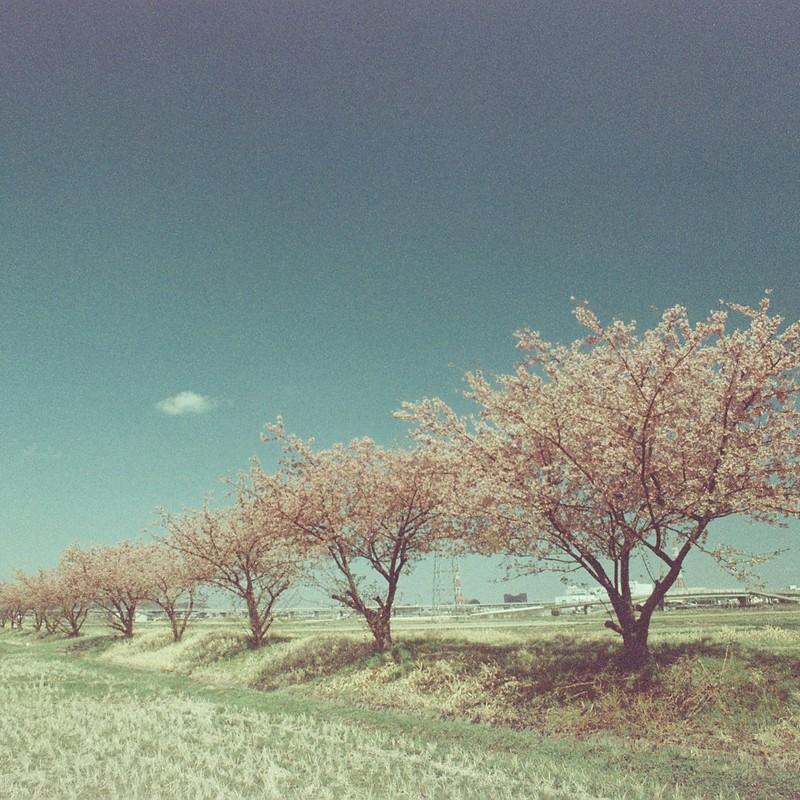 見慣れた田舎の春