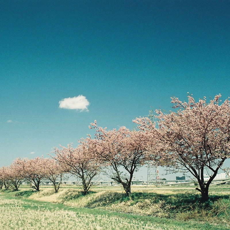 碧と雲、そして桜と