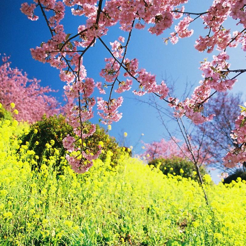 彩りに囲まれる春