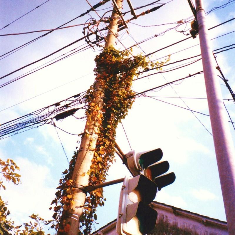 葉の茂る電柱。
