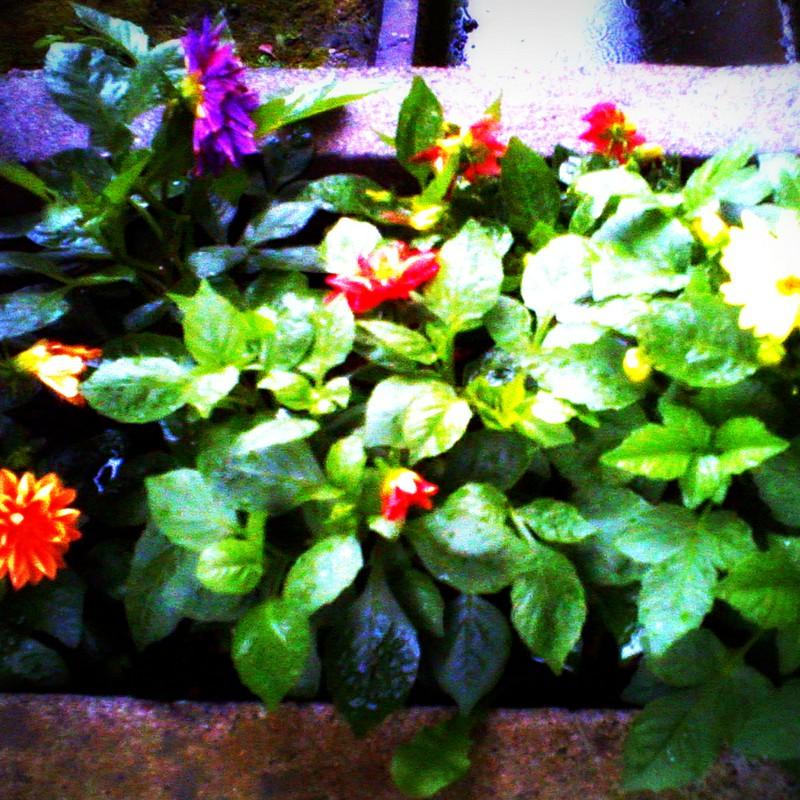 濡れた花壇