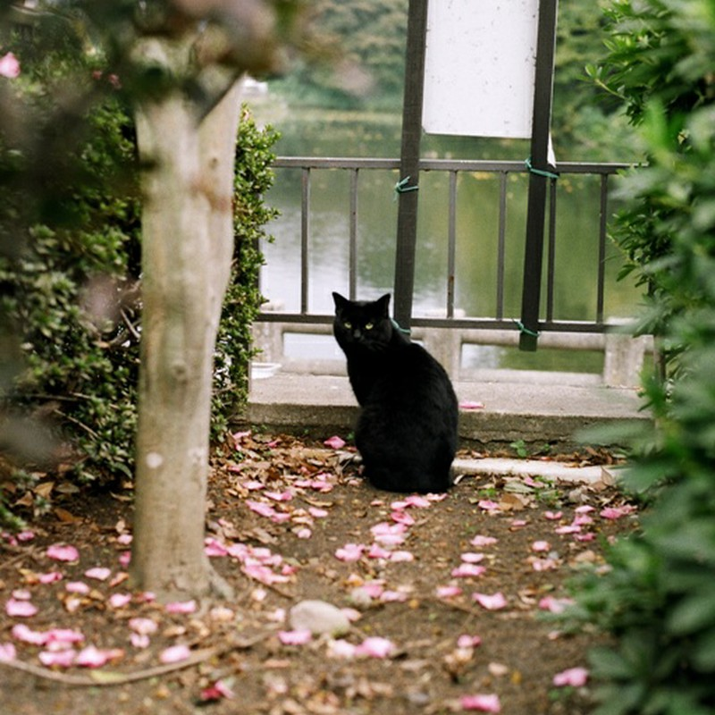 花弁と黒猫