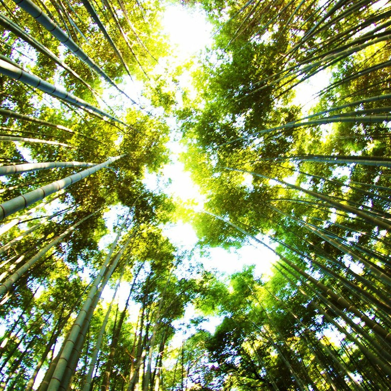 無数の竹。