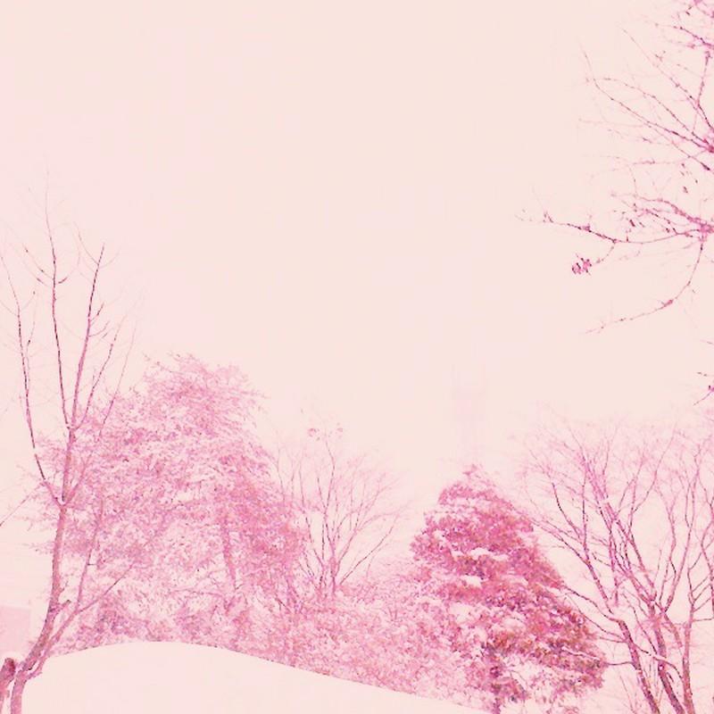 速く、梅や桜の季節にならないかなぁ