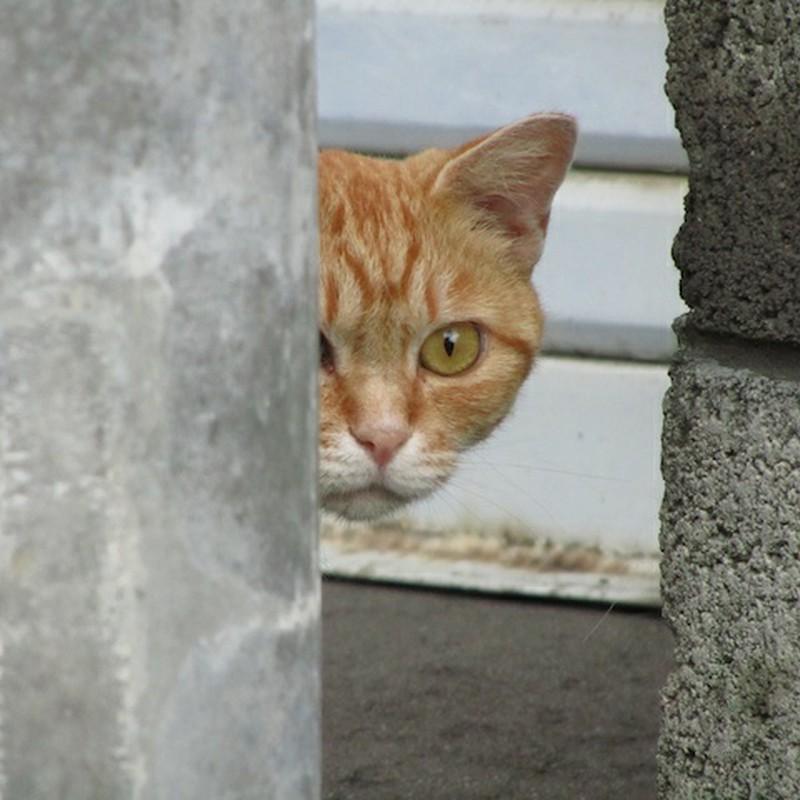 猫こっそり覗く