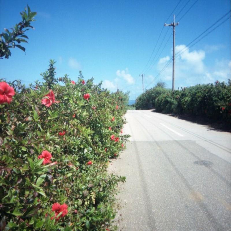 あかばなぁの咲く島の道